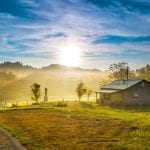 KentuckyBug_shutterstock