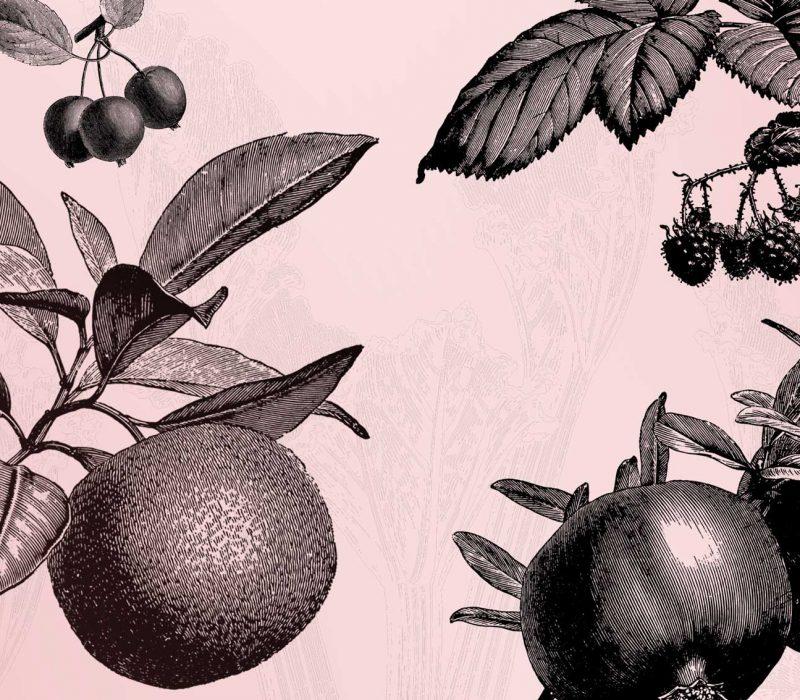 Pink Gin Geschichte & Herkunft